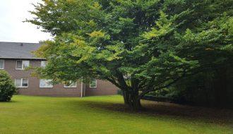 Baum auf der Wiese